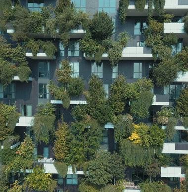 Torenhoge bomen