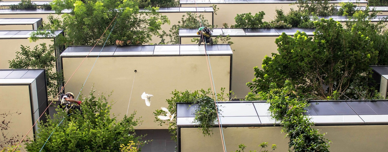C Boeri Studio Vertical Forest ph Laura Cionci 0690 lr