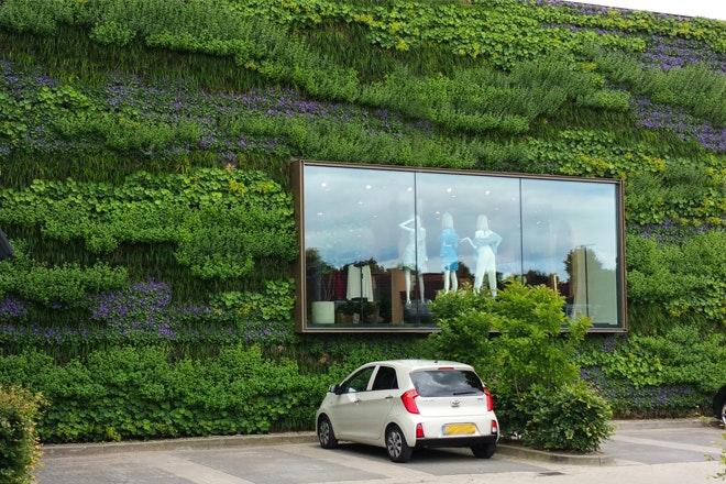 Groene muur foto Bia