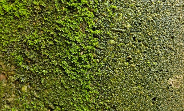 Moss delft concrete 02 2021 2